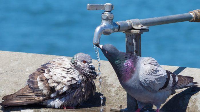 Fshati Belorta, mungon uji i pijshëm