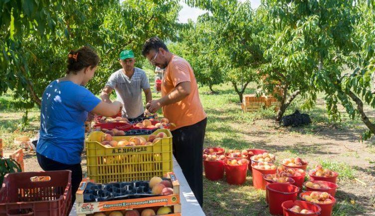 Ulen të ardhurat nga puna jashtë vendit, emigrantët sezonalë tashmë janë të papunë