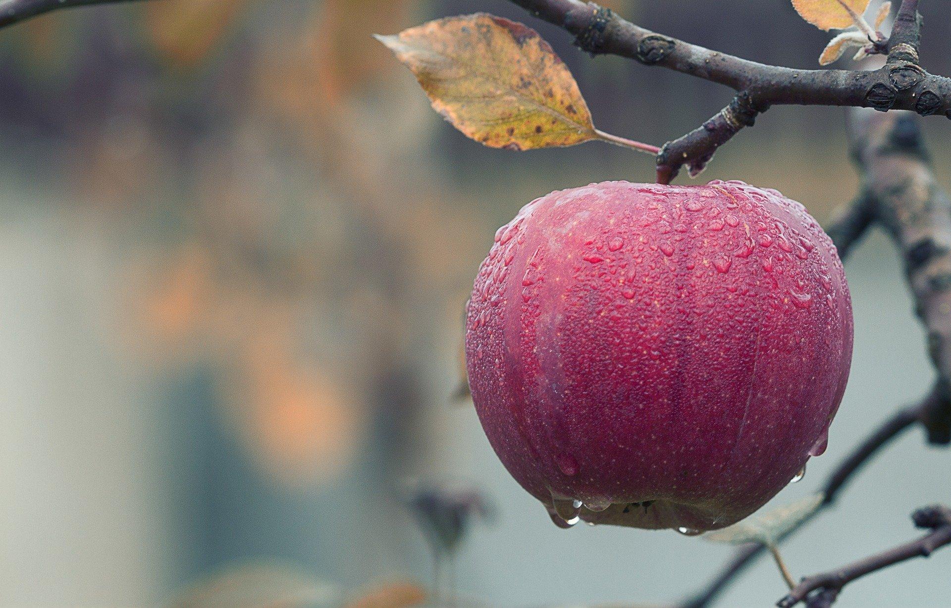Një mollë në ditë, mban doktorin larg. Mit apo Fakt?