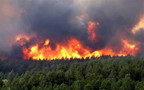 Cfare po ndodh me vatrat e zjarrit ne mbare vendin?